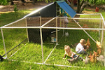 PVC pipe pastured poultry pen