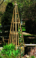 Pyramid Trellis Takes Gardening To New Heights